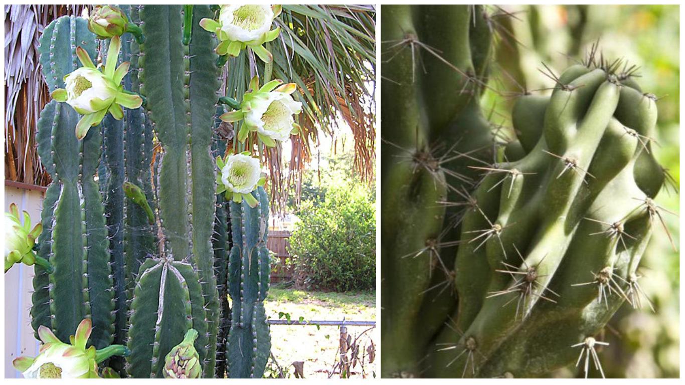 правление виды домашних кактусов фото и названия случайно